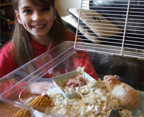 the day i got my hamster Decide that you want to get off the hamster wheel and live yourself during the day in a ten-part huffpost series.
